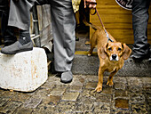 Affection, Aged, Animal, Buying, Calle, Can, Canis, Caring, City, Ciudad, Cloth, Collar, Companionship, Company, De, Desk, Dog, Ear, Ears, Elderly, Escape, Europe, Eye, Eyes, Fabric, Familiaris, Feet, Fondness, Hand, Hunger, Hungry, Incisive, Leg, Lumber,