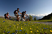 Three people on a mountain bike tour near Blaser, near Steinach am Brenner, Wipptal, Tyrol, Austria