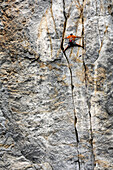 Woman rock climbing in Yosemite National Park, Climbina a fissure, California, USA