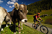 Mann fährt mit dem Mountainbike, Mountainbiken, MTB, Mountainbike Tour nahe Davos, Albula Alpen, Graubünden, Schweiz