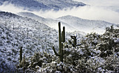 Snow covered the Rincon Mountains in the Redington Pass area of the Coronado National Forest in the Sonoran Desert on the morning of January 22, 2007, east of Tucson, Arizona, USA