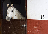 Animal, Animals, Barn, Barns, Black, Closed, Color, Colour, Contemporary, Daytime, Equitation, exterior, Facing camera, Head, Heads, Horse, Horse riding, Horsemanship, Horses, Horseshoe, Horseshoes, Looking at camera, Mammal, Mammals, One, One animal, out
