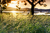 Grassland with trees close to the river at sunset, Ason river, Colindres, Cantabria, Spain