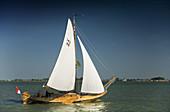 old sailing boat sailing in the coast  Volendam, Ijsselmeer lake, Holland, Netherlands, Europe