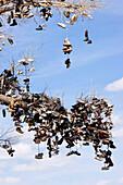 Blick auf einen Ast eines Baumes in dem tausende von Schuhen hängen, Glücksbringerbaum, US Highway 50, Middlegate, Nevada, USA