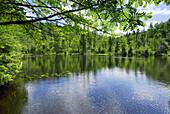 Reservoir Martinsklause, Waldhaeuser, Spiegelau, Bavarian Forest National Park, Lower Bavaria, Bavaria, Germany