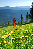 Woman hiking through meadow of dandelions, Great Arber, Bavarian Forest National Park, Lower Bavaria, Bavaria, Germany