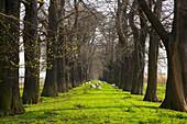 Natural Monument Eßkastanienallee (alley of edable chestnuts) near Schloß Dyck, outdoor photo, spring, morning, Jüchen, Northrhine- Westfalia, Germany, Europe