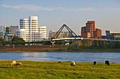 Late summer, View from Pastures at Düsseldorf - Oberkassel at Düsseldorf with MedienHafen, Lower Rhine, North Rhine-Westphalia, Germany, Europe