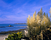 View to Rocco Tower with pampas grass in bloom in the foreground, St Ouen's Bay, Jersey, UK, Channel Islands
