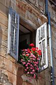 Typical window, Rovinj, Istria, Croatia