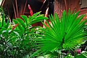 Pflanzen im Garten des Jim Thompson House, Museum, Bangkok, Thailand, Asien