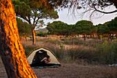 Müder Urlauber schaut morgens aus einem Zelt zwischen Pinien, Posada, Sardinien, Italien, Europa