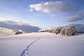 Tracks in snow and snow covered trees, Schauinsland, Black Forest, Baden Wurttemberg, Germany