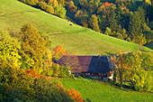 Autumnal tint near St. Ulrich, Farmhouse, Markgräflerland, Black Forest, Baden-Württemberg, Germany, Europe