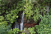 Waterfall, Fuente Cordero, Fuentes Marcos y Cordero, in the natural preserve, Parque Natural de las Nieves, east side of extinct volcanic crater, Caldera de Taburiente, above San Andres, UNESCO Biosphere Reserve, La Palma, Canary Islands, Spain, Europe