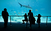 People at the Sea World Aquarium,  Surfers Paradise,  Gold Coast,  Australia