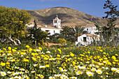 Fuerteventura,  Canary Islands,  Spain