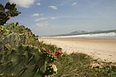 Deserted beach and cactuses, Mui Ne, Binh Thuan Province, Vietnam, Asia