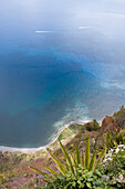 Cliff view with Agave in the foreground, View from Cabo Girao, Madeira, Portugal