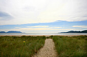 Dune landscape and view at the Atlantic, Inch, Dingle Peninsula, County Kerry, west coast, Ireland, Europe