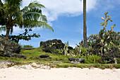 Cactuses and Aloe Vera on the beach in the sunlight, Paradise Beach, Bantayan, Cebu, Visayas, Philippines, Asia