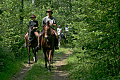 Horseback Riding, Transbeauce Race From Chartres To Orgeres-En-Beauce, Eure-Et-Loir (28), France