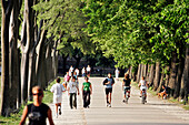 Promenade For Pedestrians And Cyclists On The Shaded Ramparts Which Go Around The Town Of Lucca, Tuscany, Italy