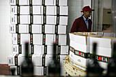 Vineyards Near Casablanca, Terroir Of Benslimane. Bottling, Morocco, Maghrib, North Africa