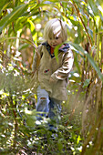 Girl (2 years) walking through a cornfield, Berg, Bavaria, Gemany