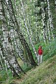 Woman hiking on trail through birche wood, Monti Lariani, Lake Como, Lombardy, Italy
