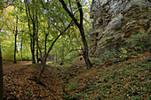 hiking trail in the Deister hills, near Hanover, Lower saxony, northern Germany