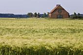 Barn beside barley field, near Hanover, Lower Saxony, Germany