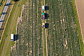 aerial view of fields in Calenberger Land, region Hanover, Lower Saxony, northern Germany