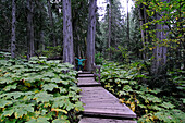 hiking boy, Giant Cedars Boardwalk, Mount Revelstoke National Park, British Columbia, Canada