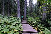 hiking boy, Giant Cedars Boardwalk, Mount Revelstoke National Park, British Columbia, Canada