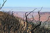 Mountain biker, Hazard County Bike-Trail, Moab, Utah, USA