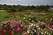 Europa Rosarium in Sangerhausen, the largest collection of roses in the world, Saxony-Anhalt, Germany, Europe