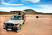 Tourists on a safari watching an ostrich, Aquila Lodge, Cape Town, Western Cape, South Africa, Africa