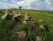 Rocks and lonely tree. Maziwsze region. Central Poland