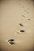 Footprints on beach,  Biarritz. Pyrénées-Atlantiques,  Aquitaine,  France