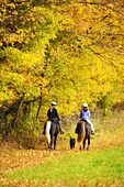 America, Autumn, Color, Colour, Companion, Contemporary, Dog, Fall, Friend, Girl, Horse, Landscape, Leave, Meadow, New, New Hampshire, October, Pasture, Pet, Ride, scenic, Tree, United states, Vermont, Yellow, S19-830121, agefotostock