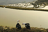 ducks on the edge of the rice terraces at Yuanyang in Yunnan China