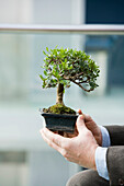 Adult, Adults, Allegory, Bonsai, Bonsais, business, Businessman, Businessmen, Businesspeople, Businessperson, Care, Care take, Care taking, Cares, Caretake, Caretaking, Caring, Close up, Close-up, Closeup, Color, Colour, Concept, Concepts, Contemporary, C