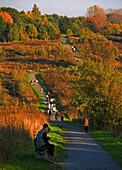 Road at fall