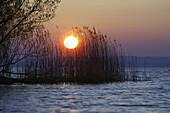 Rising sun over reeds, Fraueninsel, Lake Chiemsee, Chiemgau, Bavaria, Germany