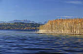 View across the lake from Herrenchiemsee, Wendelstein Mountain range in the background, Lake Chiemsee, Chiemgau, Bavaria, Germany