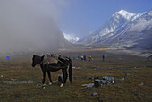 Campground on trek towards Gocha La below Mount Pandim at Kangchenjunga region, Sikkim, Himalaya, Northern India, Asia