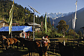 Tshoka village, Trek towards Gocha La in Kanchenjunga region, Sikkim, Himalaya, Northern India, Asia