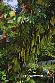 Prayer flags in a tree with ferns at holy lake, Sikkim, Himalaya, Northern India, Asia